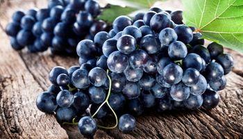 Hrvati odlaze van, a grožđe na Pelješcu beru Francuzi