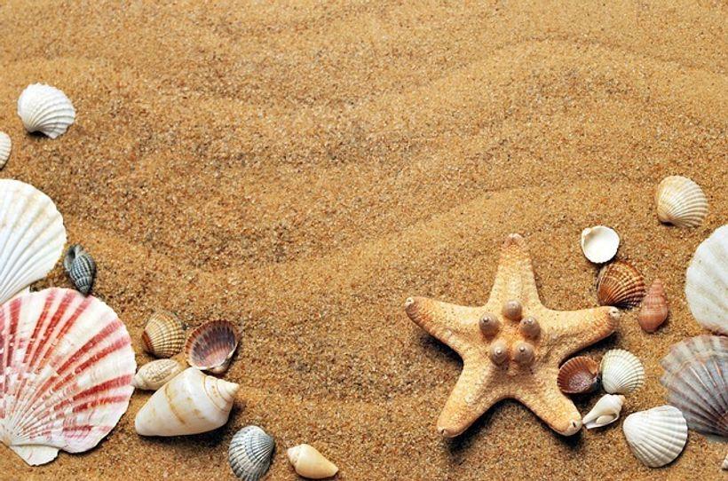 školjke i zvijezde na pijesku