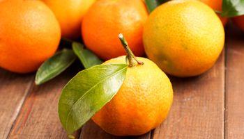 Nedostaje 150 sezonskih radnika za berbu mandarina