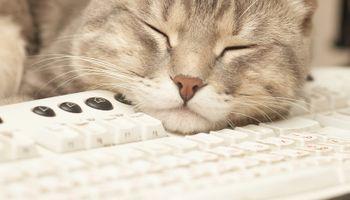 Mačke, psi i koze u ulozi terapeuta u japanskim tvrtkama