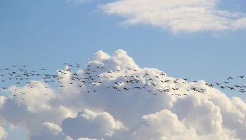 ptice selice okružene plavim nebom i oblacima
