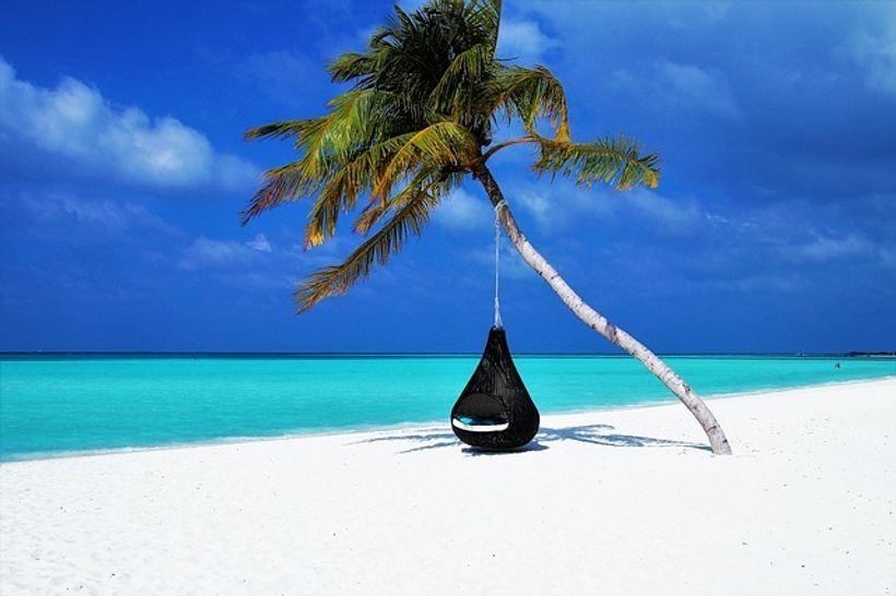 pješčana plaža s palmom i mrežom za ležanje