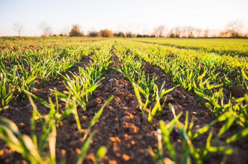 Poljoprivrednici čekaju da se što prije krene s reformama
